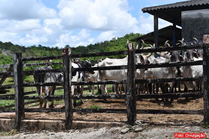 Adab anuncia recadastramento obrigatório de todas as propriedades rurais