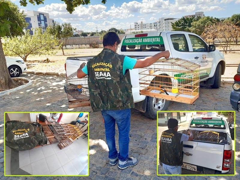 Secretaria de Agricultura e Meio Ambiente recebe entrega voluntária de pássaros silvestres